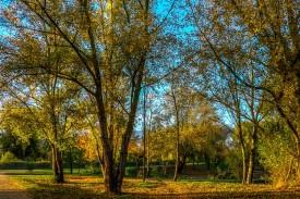 autumn-sunlight